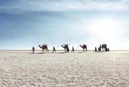 winter-destinations-part-four-from-rann-of-kutch-to-coastal-gujarat