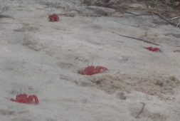 a-visit-to-the-land-of-red-crabs-tajpur