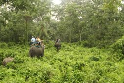 now-you-can-do-online-booking-of-forest-safari-of-north-bengal
