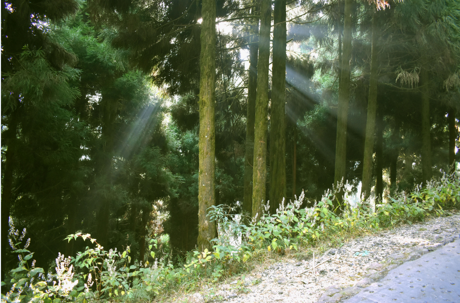 Sunlight peeping through the forest.